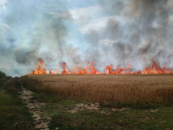 Több hektáron égett a gabona