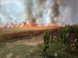 Gyorsan terjedt a tűz