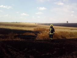 Tűzoltók átvizsgálták a már leégett területet