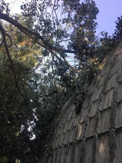 Háztetőre is rádőlt egy fa