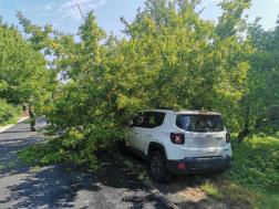 Szigetmonostoron egy autóra dőlt a fa